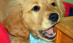 Pet Image Gallery When left to their own devices, dogs and other pets can cause serious damage. See more pet pictures.