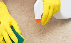 If there are stains your carpet, a simple spot treatment will rarely do the trick to remove them.