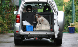 A properly crated pet will keep the driver from becoming distracted.