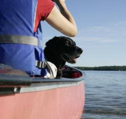 Sure, you can travel with your pet by boat, but for long trips you may want to look into flying. See more pet pictures.