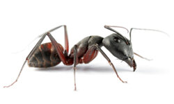 Could ants help us design navigation systems for robots?