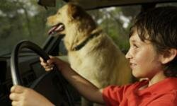 It's not a good idea to let your dog ride in the front seat. It's also not a good idea to have your eight-year-old son do the driving. See more pet pictures.