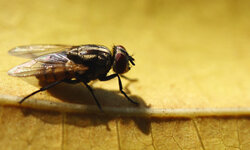 One of the best ways to combat flies is to go after them where they breed.