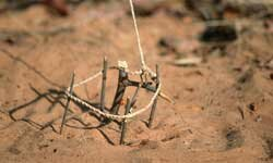 A simple snare can be held up and open with sticks.