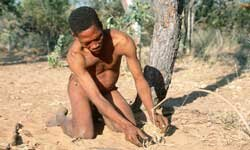 A bushman in South Africa sets a snare to catch wildlife.