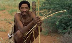 This bushman could makehis bow and arrow work for him if he usedthem to make a bow trap.