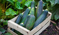 Got a bumper crop of zucchini? Share this versatile veggie with your family, friends and co-workers. See more vegetable pictures.