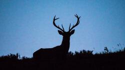 Can Humans Catch 'Zombie Deer Disease'?