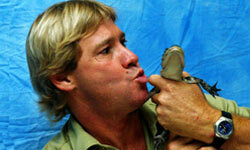 TV personality and animal lover Steve Irwin -- AKA the Crocodile Hunter --  was killed in a freak underwater accident when he was pierced in the heart by a stingray tail in 2006.