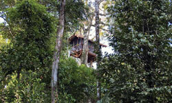 There's probably no better spot in the Amazon to spend the night than in a tree house, and there's no better tree house than the Canopy Tree House Suite at the Inkaterra Reserva Amazonica.