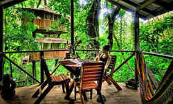 Finca Bellavista is a veritable tree house community set within 300 acres in the rain forest of Costa Rica.