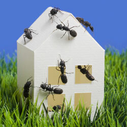 How do you keep bugs out of the house?