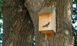 A bat house may help cure your problem.