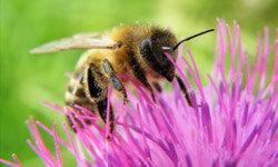 How do bumblebees poop?