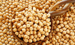 Garbanzo beans cooked with salt for seasoning would have been staple fare for Columbus and his men.