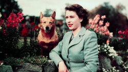 How the Queen Fell in Love With Corgis
