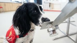 Dogs Are Being Trained to Sniff Out Coronavirus in Humans