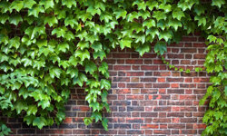 If you're looking for simple green colors, ivy is the way to go.