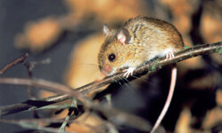 Mice can leave behind a lot of nasty and dangerous germs.