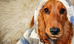 Your pup's fur may not be enough protection against frigid temperatures. See more pet pictures.