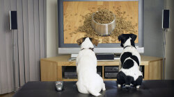DOGTV: The HBO for Fido?