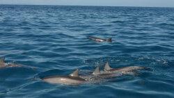 Dolphins Sleep Half a Brain at a Time