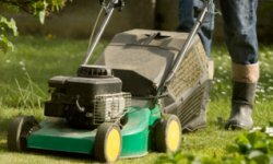 How much do you know about eco-friendly lawn care?