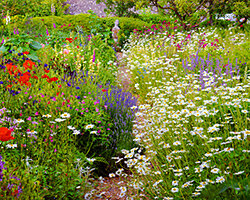 Lush English gardens are a popular style for backyards.