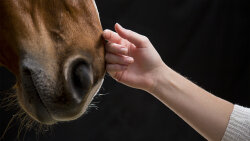 Horses Have an Extraordinary Ability to Help Humans