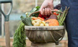 Fall harvest brings in loads of fresh goodies. See more pictures of vegetables.