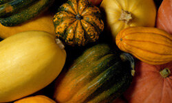 The wide variety of squash during the fall makes cooking with them more exciting and rewarding.