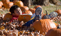 Pumpkin patches come loaded with fun -- and photo opportunities.