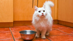 You're Feeding Your Cats All Wrong