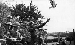 Before radio, soldiers trained carrier pigeons to deliver messages during wartime. This photo was taken during World War I.