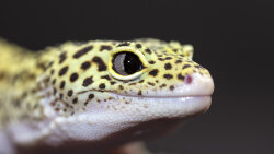 5 Reasons Geckos Are the Coolest Lizards