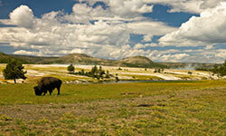 If you landed a gig as a park guide with Yellowstone National Park, this could be your daily view.