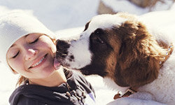 Saint Bernards are known for their affectionate and gentle natures.