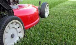 Hire someone to take care of your yard and cut the grass short to limit pollen exposure.