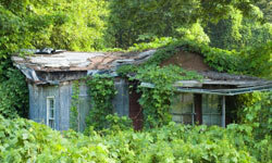 Kudzu smothers homes and cars and is a general nuisance. See more green science pictures.