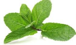 Mint helps ease food through the intestines.