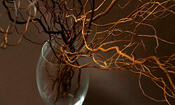 Decorating with branches from your neighborhood is simple and inexpensive.