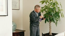 Historically, Houseplants Were For Rich; Now, Chinese Money Tree Purports Wealth