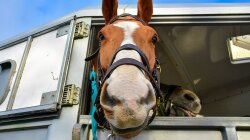Aromatherapy Shows Promise for Stressed Horses