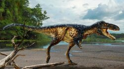 Discovery of Horse-sized Dinosaur Sheds Light on T. Rex Evolution