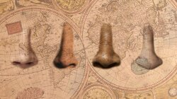 Climate Helped Shape the Human Nose, Study Says