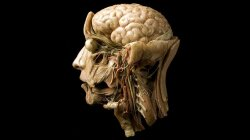 The Future of 3-D Printing Is … Living Human Brains?