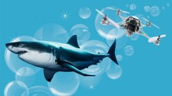 How Drones Can Protect Us From Sharks — and Sharks From Us