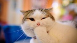 Cat Scratch Fever's Not Just an Infectious Song