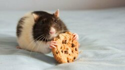 'Off Switch' for Appetite Accidentally Discovered in Brain Enzyme