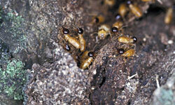Termites can cause severe damage on wood.